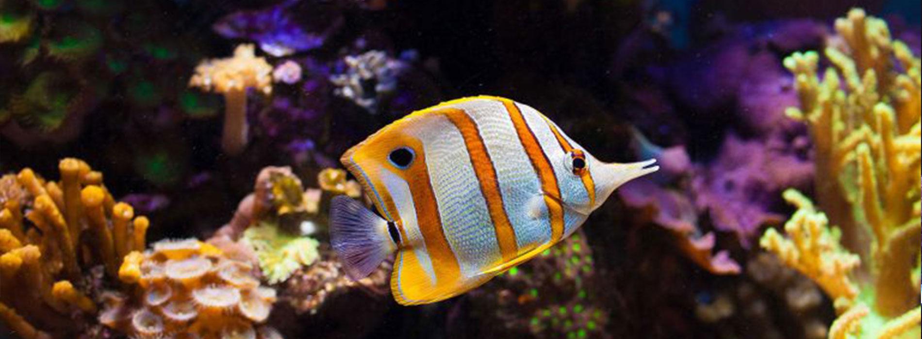 نگهداری از ماهی رنگی در آکواریوم
